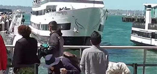 Whale-Watching-Boat-Crashing-Into-San-Diego-Dock