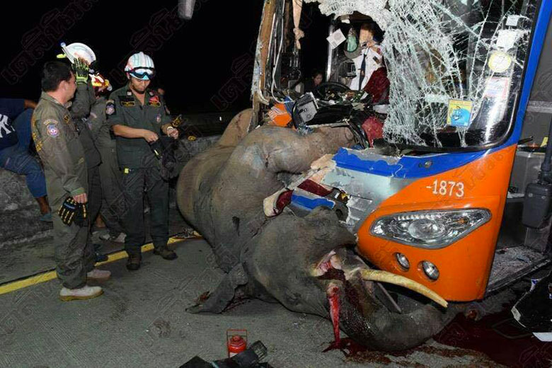 horrible-bus-accident-by-hitting-an-elephant-01