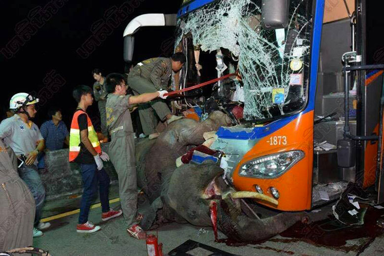 horrible-bus-accident-by-hitting-an-elephant-02