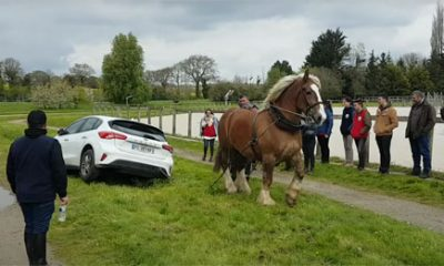 cheval sauve voiture embourbee fosse